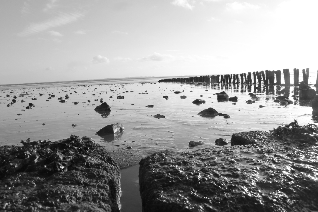 Impression-Wattenmeer